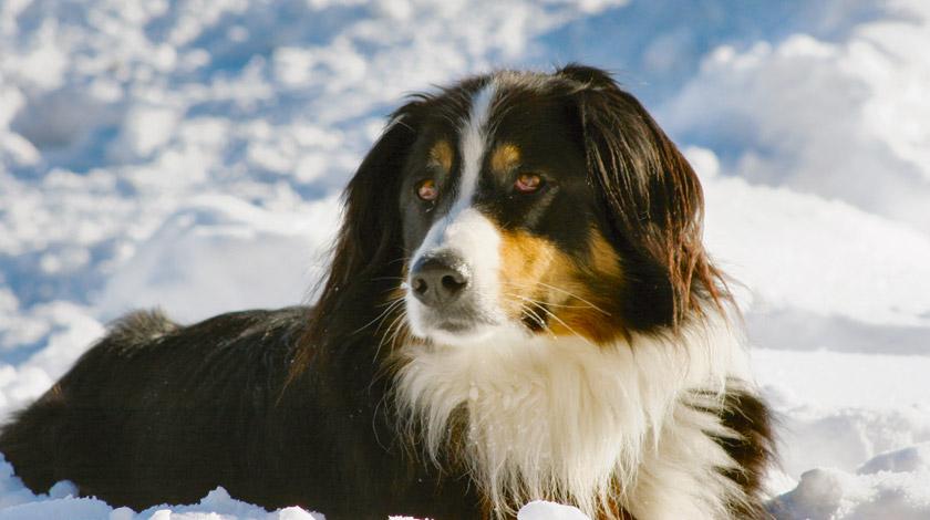 Hunde hotel simi zermatt for Hotel auf juist mit hund